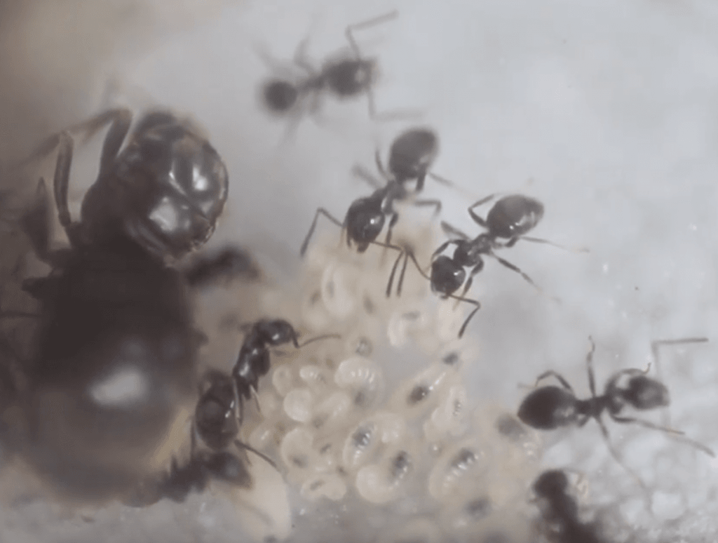 myrms ant colonies journal