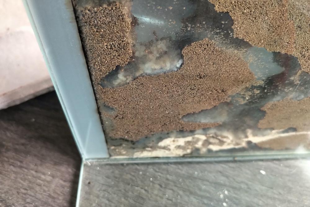 Myrmica rubra brood chamber